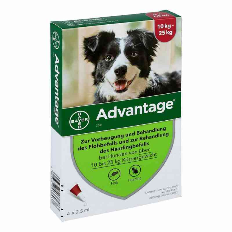 Advantage 250 für Hunde Lösung  bei apo.com bestellen