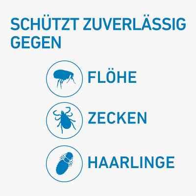 Frontline Spot on Hund 40 veterinär Lösung gegen Floh und Zecke  bei apo.com bestellen