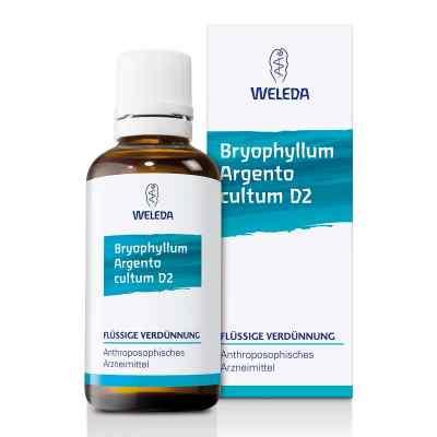 Bryophyllum Argento Cultum Dilution D2  bei apo.com bestellen