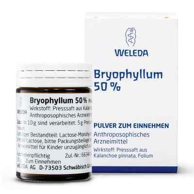 Bryophyllum 50% Pulver zum Einnehmen  bei apo.com bestellen