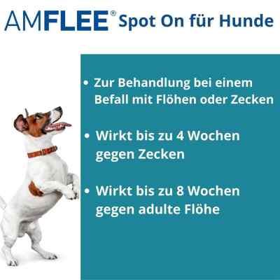 Amflee 268 mg Lösung zur, zum Auftropfen für grosse Hunde  bei apo.com bestellen