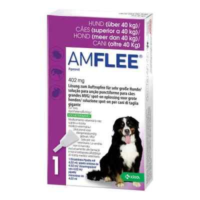 Amflee 402 mg Lösung zur, zum Auftropfen für sehr gr.Hunde  bei apo.com bestellen